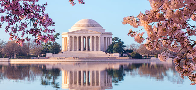 Thomas Jefferson Memorial with Cherry Blossoms
