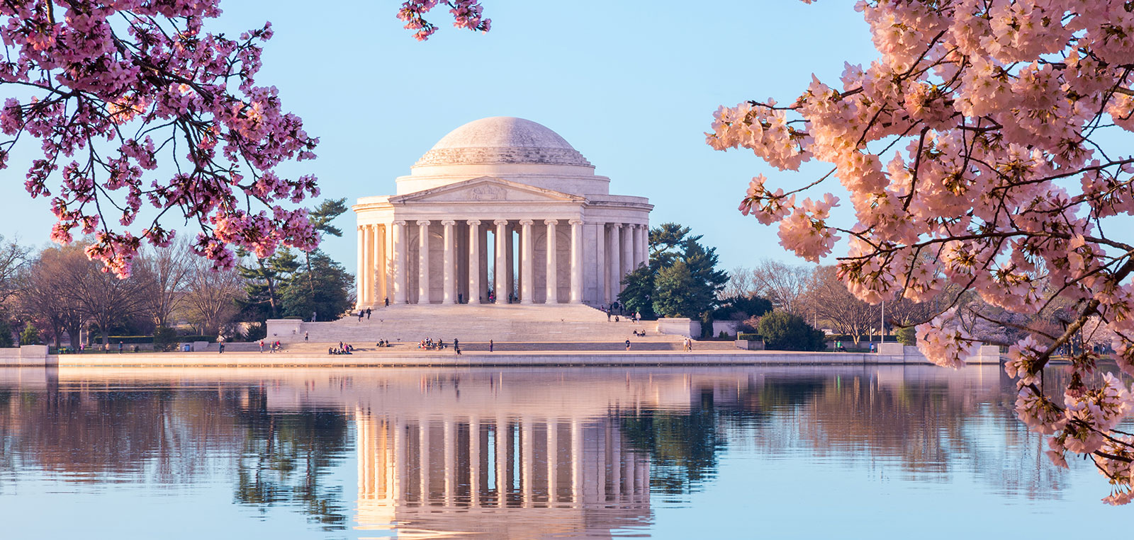 Cherry Blossom Festival Events One Washington Circle Hotel,Perennials Plant With Purple Flowers And Green Leaves